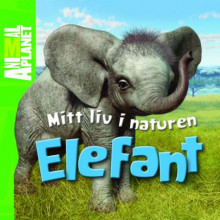 Elefant av Meredith Costain (Innbundet)